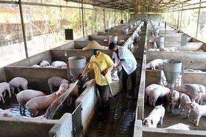 Hạn hán ảnh hưởng nghiêm trọng đến sản xuất nông nghiệp các tỉnh duyên hải Nam Trung Bộ và Tây Nguyên