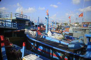 Tàu cá bị mắc kẹt giữa âu thuyền ở Quảng Ngãi