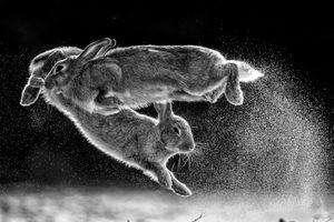 'Bước nhảy' - Quán quân cuộc thi Nature Photographer of the Year