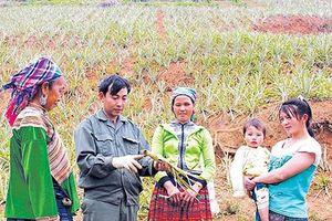 Nâng cao năng lực thực hiện công tác giảm nghèo cho cán bộ thôn, bản ở Thanh Hóa