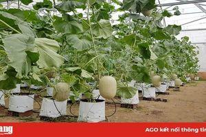 Chuyển đổi cơ cấu cây trồng theo hướng hiệu quả