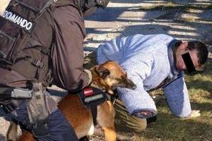 Chó nghiệp vụ cắn chết một lính đặc nhiệm