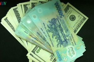 Tỷ giá ngoại tệ hôm nay 15/11: USD chững lại