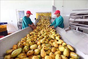 Xuất khẩu nông sản chính ngạch: Con đường tất yếu