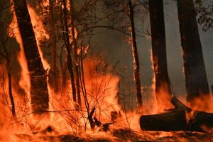 Một người đàn ông Úc bị buộc tội gây cháy rừng để bảo vệ vườn cần sa