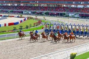 Đà Nẵng kêu gọi đầu tư Trường đua chó, Trường đua ngựa