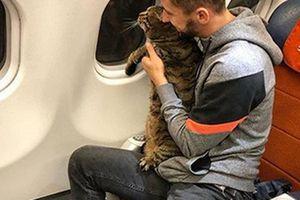 Bị phạt vì mang… mèo béo lên máy bay