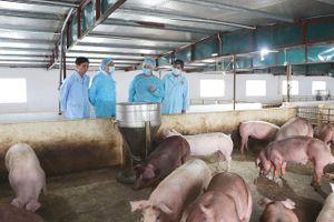 Bình ổn giá thịt lợn: Doanh nghiệp đóng vai trò quan trọng