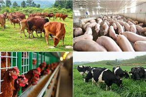 Kim ngạch xuất khẩu ngành chăn nuôi đạt hơn 850 triệu USD