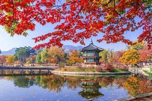 Đừng bỏ lỡ những loài hoa gõ cửa mùa đông Nhật - Hàn - Đài