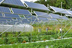 Kết hợp sản xuất nông nghiệp với khai thác năng lượng mặt trời ở Việt Nam