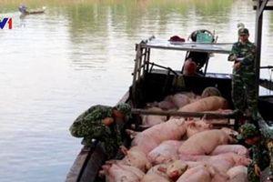 Bắt vụ vận chuyển trái phép hơn 3,7 tấn lợn từ Campuchia về Việt Nam