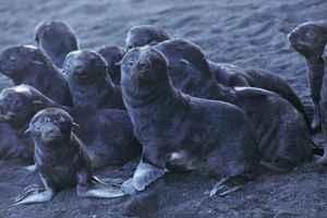 Băng tan gây dịch bệnh cho động vật biển Đại Tây Dương