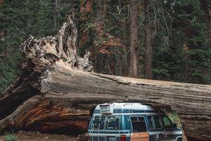 Đường hầm xuyên cây cổ thụ ở Mỹ
