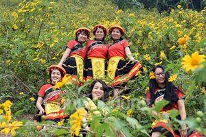 Rực rỡ sắc vàng hoa dã quỳ trên núi Ba Vì