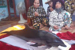 Bình Định: Bắt được cá Voi tưởng cá lạ, đem ra chợ bán