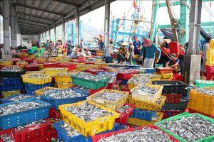 Ninh Thuận tổ chức lại nghề khai thác thủy sản
