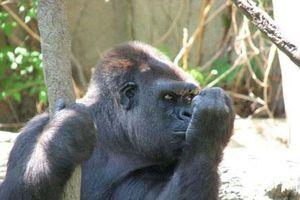 Ảnh hài hước không tin nổi trong thế giới động vật