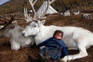 Băng tan đe dọa nghề chăn tuần lộc Mông Cổ