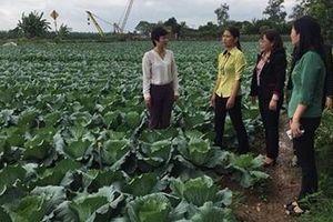 Phụ nữ Thái Bình chung sức xây dựng nông thôn mới