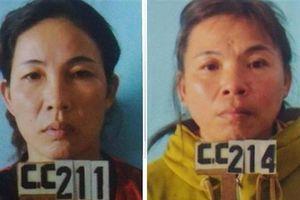 Bắt 3 phụ nữ và người đàn ông vác dao chặt hàng trăm cây keo vì mâu thuẫn