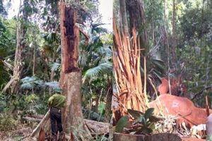 Thanh niên 18 tuổi tử nạn khi chặt cây