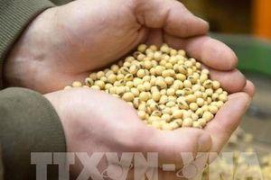 Thị trường nông sản Mỹ tuần qua: Biến động trái chiều