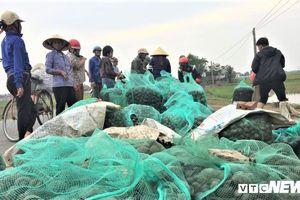 Dân Hà Tĩnh đổ xô ra đồng bắt ốc bươu vàng hại lúa