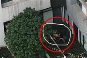 Bé gái rơi từ tầng 39 Goldmark City: Bố quỳ, khóc nghẹn