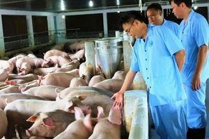 Dịch 'ăn' gần 6 triệu con lợn, lãnh đạo ngành chăn nuôi thấy 'tạm hài lòng'