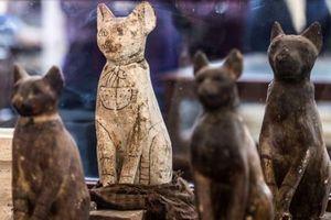 Ai Cập khai quật bộ sưu tập xác ướp sư tử, mèo, cá sấu khổng lồ