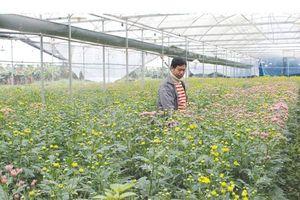 Thạch Thất hút đầu tư vào nông nghiệp
