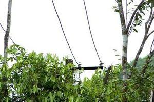 Sớm sửa chữa, nâng cấp công trình điện tại vùng kinh tế Phúc Trạch