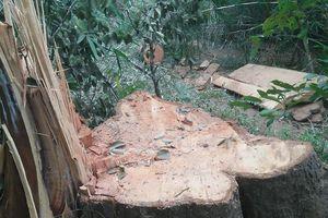 Kiểm lâm nói vụ phá rừng đặc dụng Nam Kar là 'nghiêm trọng'