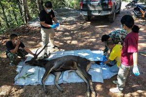 Hươu hoang dã chết với 7 kg nhựa trong dạ dày