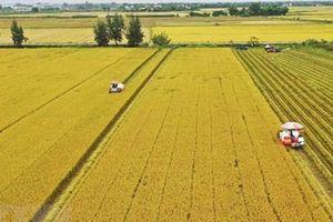 Gỡ những 'nút thắt' trong tích tụ đất đai cho sản xuất nông nghiệp