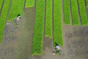Châu Á sẽ đối diện với khủng hoảng thiếu thực phẩm trong thập kỷ tới?