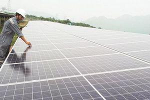 Đấu thầu không phải 'phép màu' phát triển điện mặt trời
