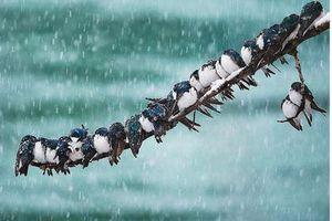 Chùm ảnh động vật chống chọi với mùa đông khắc nghiệt