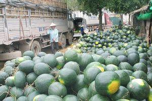 Xuất khẩu rau, củ, quả sang Trung Quốc: Nắm rõ thông tin để tiếp cận chính ngạch