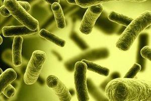 3 nhà máy nước ở Nghệ An bị phạt vì nước nhiễm khuẩn Coliform