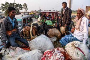 Tín đồ Hindu đổ về lễ hội hiến tế động vật lớn nhất thế giới ở Nepal