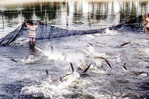 Nhiều địa phương báo cáo chưa trung thực về tình hình dịch bệnh thủy sản