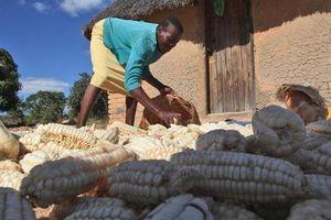 LHQ cảnh báo nạn đói nghiêm trọng ảnh hưởng tới nửa dân số Zimbabwe