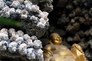 Tỉnh có chùa Ốc độc nhất vô nhị ở Việt Nam