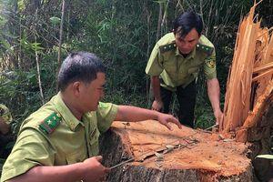 Đắk Lắk: Mở rộng điều tra vụ phá rừng đặc dụng Nam Ka