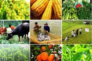 Thúc đẩy chế biến, mở rộng thị trường nông sản