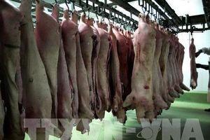 Trung Quốc công bố khôi phục sản lượng thịt lợn trong 3 năm tới