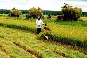 Việt Nam mới 'thiên' về giám sát mà chưa chú trọng về đánh giá trong kinh tế nông nghiệp