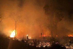 Truy tìm thủ phạm đốt rừng ở vườn quốc gia Phú Quốc